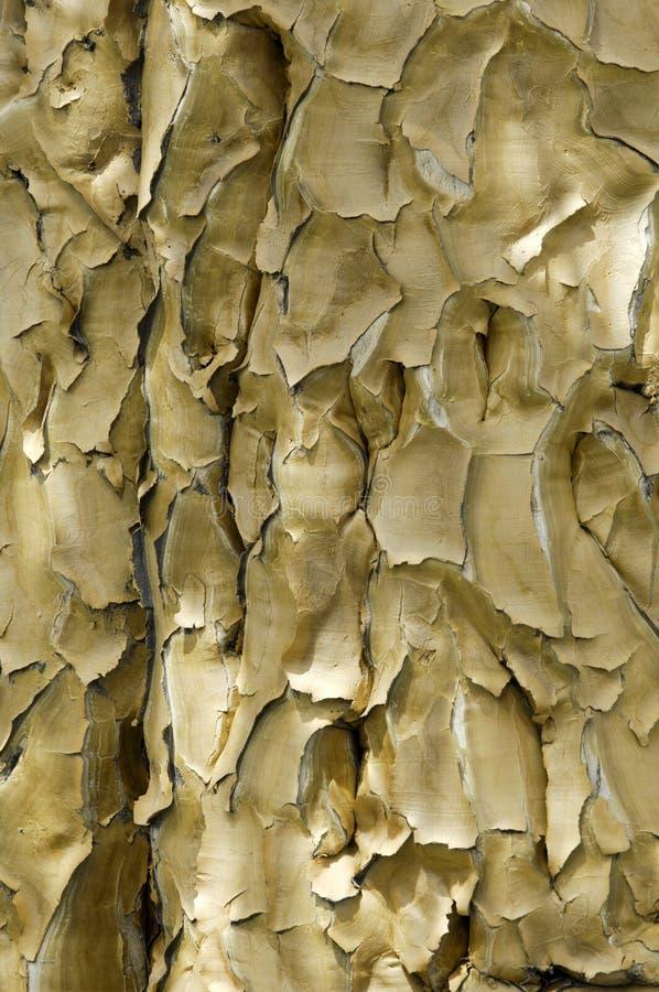 Barke de un árbol del estremecimiento en Namibia fotografía de archivo