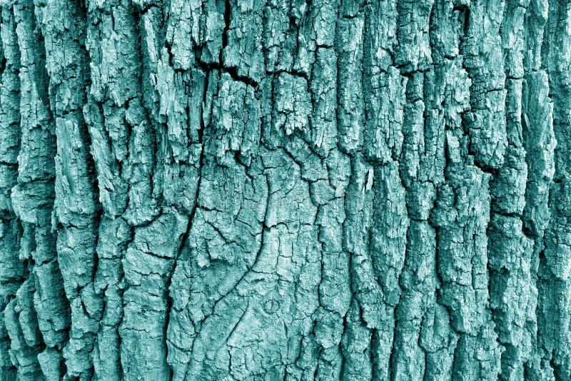 Barke der alten großen Eichenbeschaffenheit im cyan-blauen Ton stockfoto