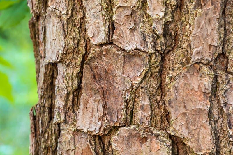 Barke eines Baums lizenzfreie stockfotos