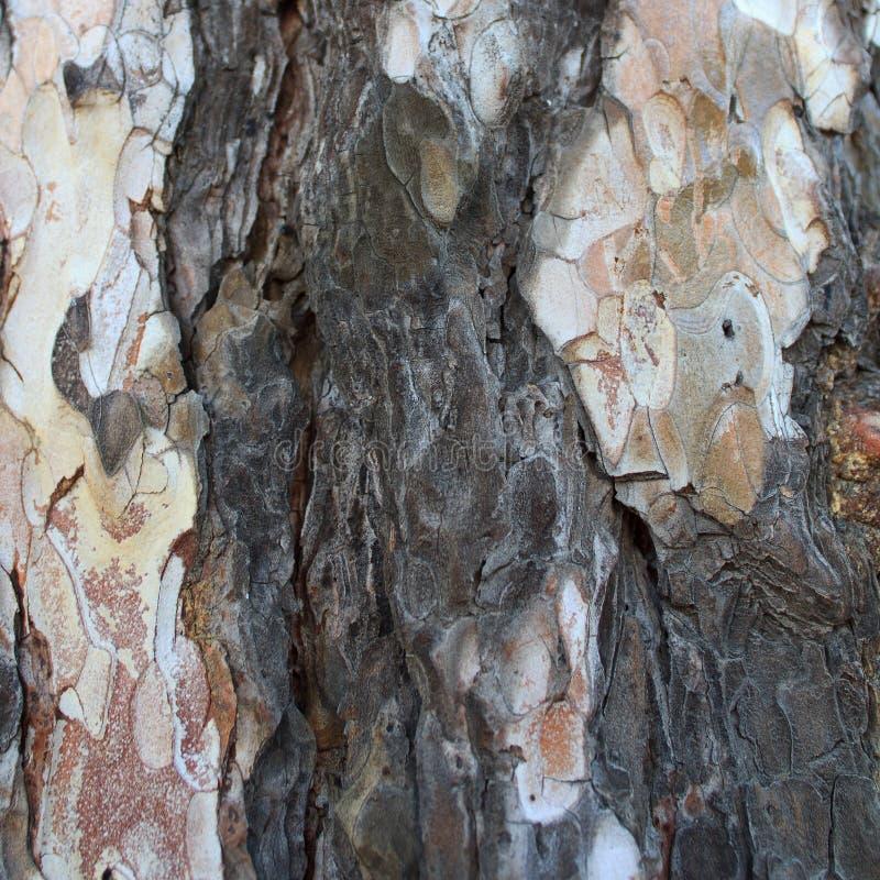 Barke, Hintergrund, Beschaffenheit, Baum, alt, natürlich, braun, weiß, Farbe, Entwurf, Natur, gestreift, abstrakt, Nahaufnahme, M lizenzfreie stockbilder