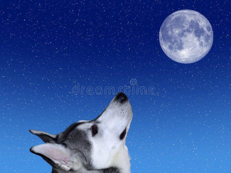 Barke am Mond lizenzfreies stockbild