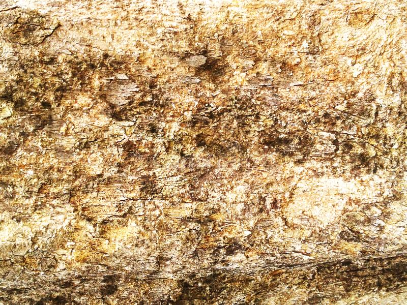 barkeeper Старая деревянная предпосылка текстуры дерева Расшива крупного плана естественная сватает стоковое фото