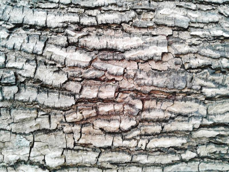 barkeeper Старая деревянная предпосылка текстуры дерева Расшива крупного плана естественная сватает стоковые фото