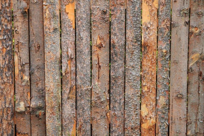 Barkenholzbeschaffenheit stockfotografie