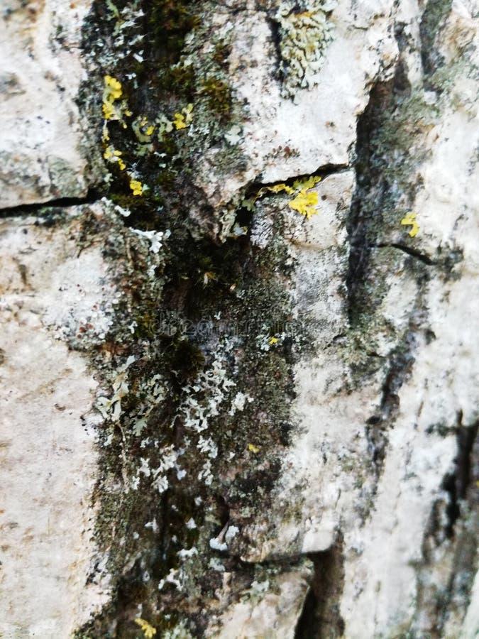 barkentyna zdjęcie royalty free