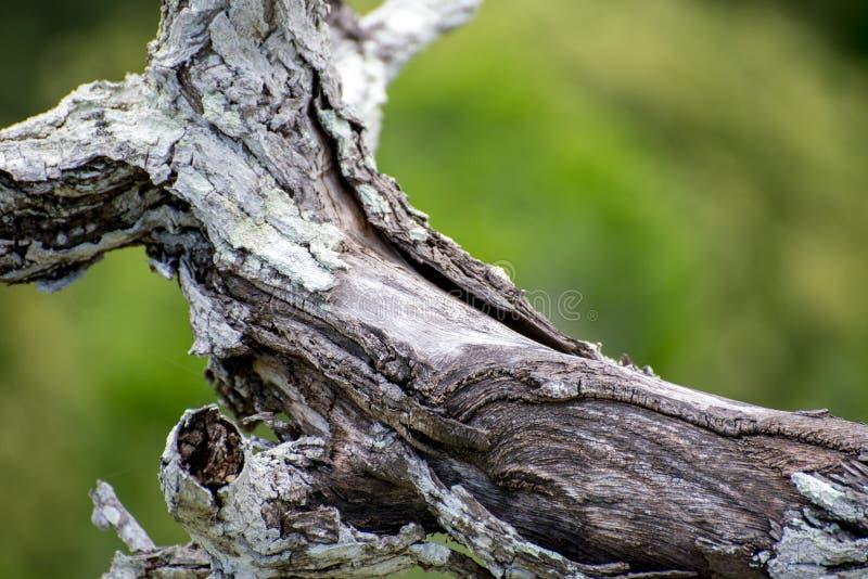 Barkentyna drewno zdjęcie stock