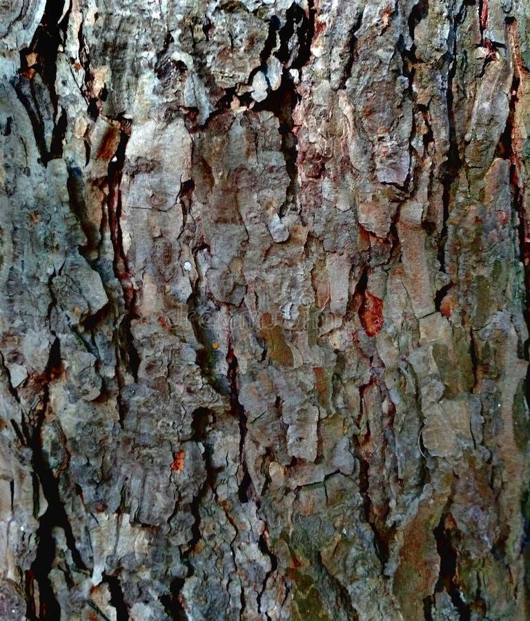 Barkentyna drzewna brzoza jako naturalny tło zdjęcie royalty free