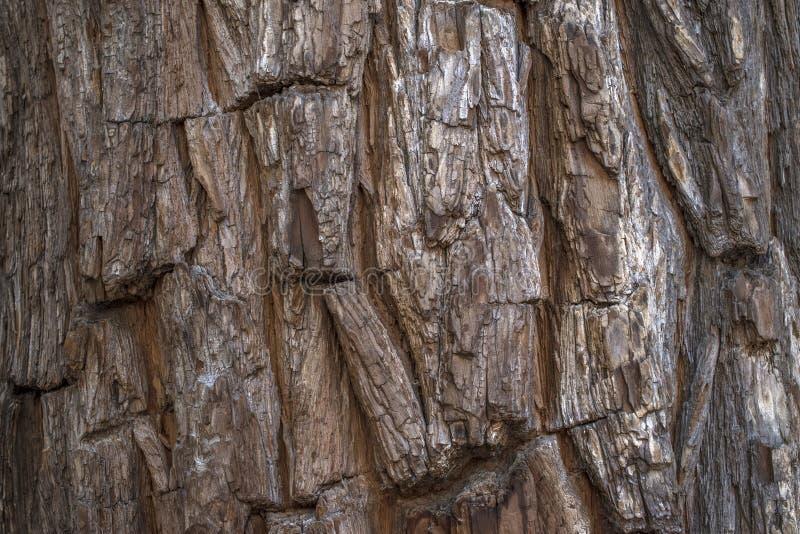 Barkentyna drzewny baga?nik obrazy stock
