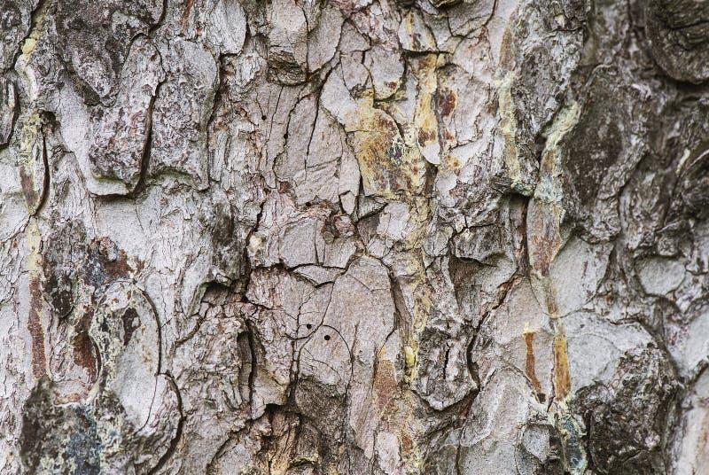 Barkentyna drzewo pokazuje w górę zakończenia obrazy stock