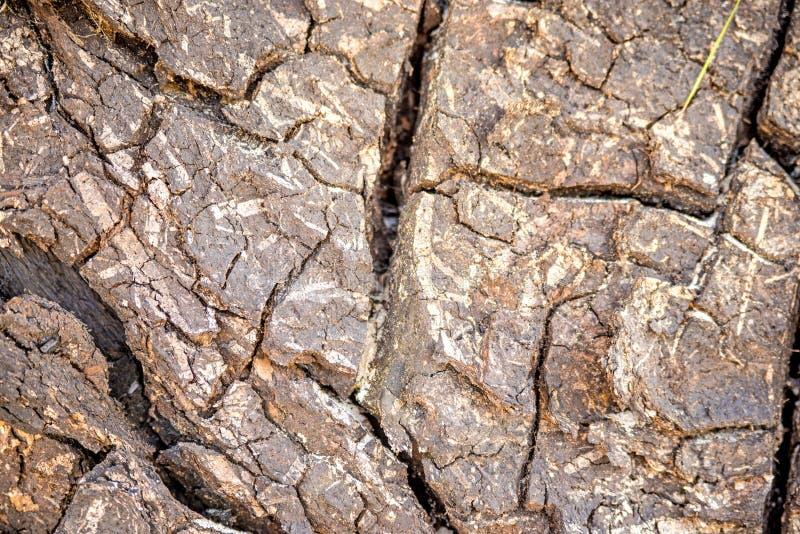 Barkentyna drzewo z pęknięciami obraz stock