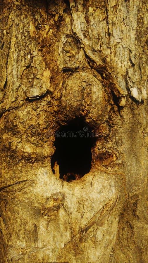 Barkentyna drzewo z swój jamą zdjęcia stock