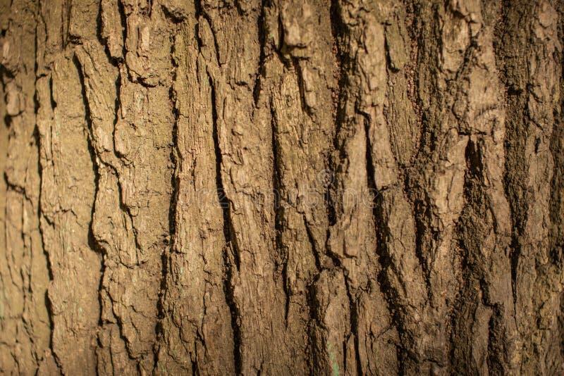 Barkentyna du?y drzewo zamkni?ty w g?r? zdjęcie stock