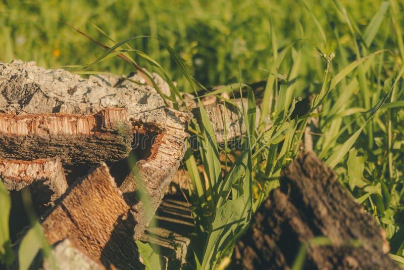 Barkentyna korek po środku trawy obrazy royalty free
