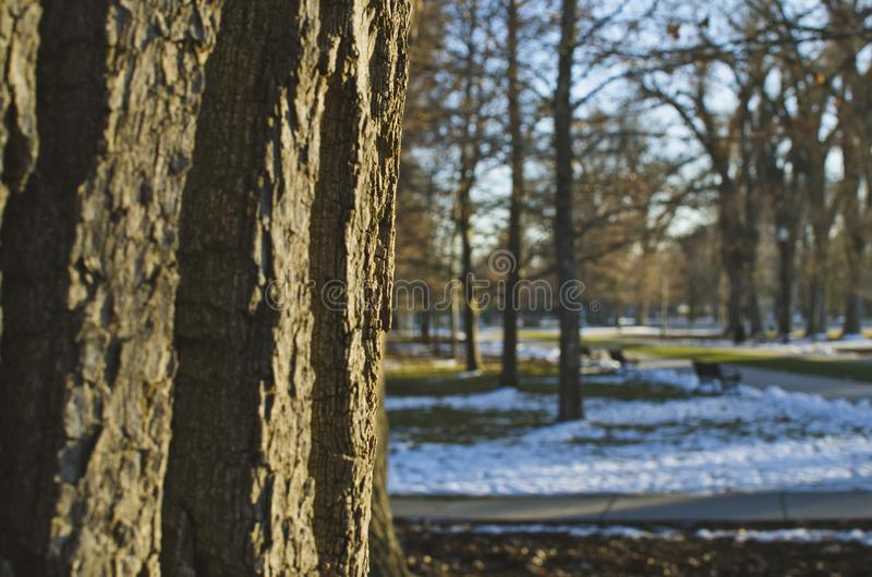 Barkentyna na drzewie w zimnym Utah parku obrazy royalty free