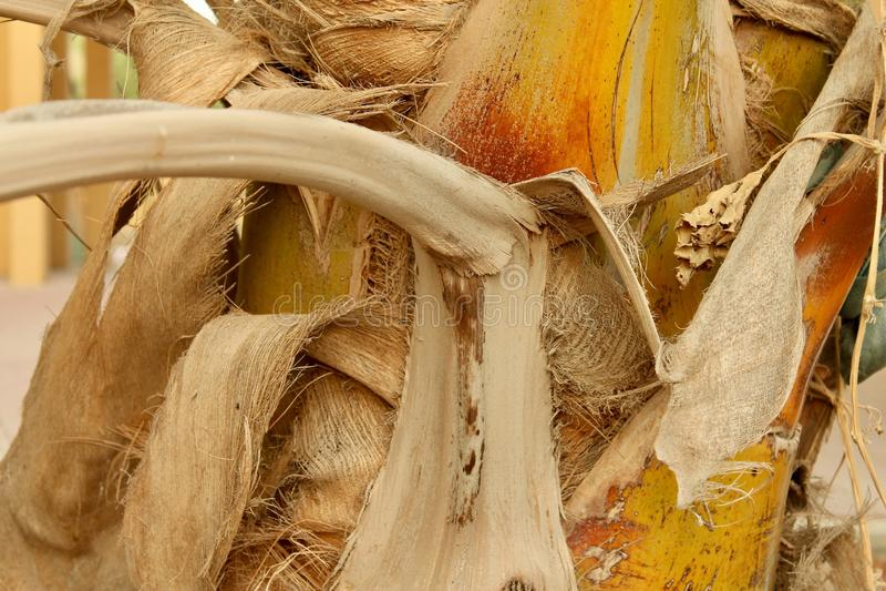 Barkentyna palma obraz stock