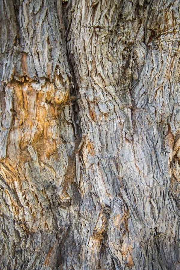 Barkentyna wielki drzewo fotografia royalty free