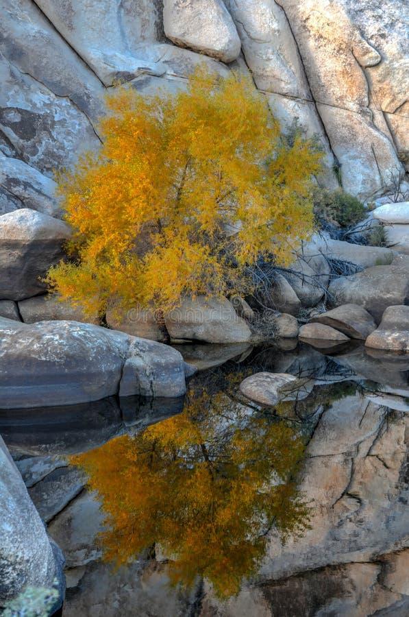 Barker Dam - Joshua Tree National Park photographie stock