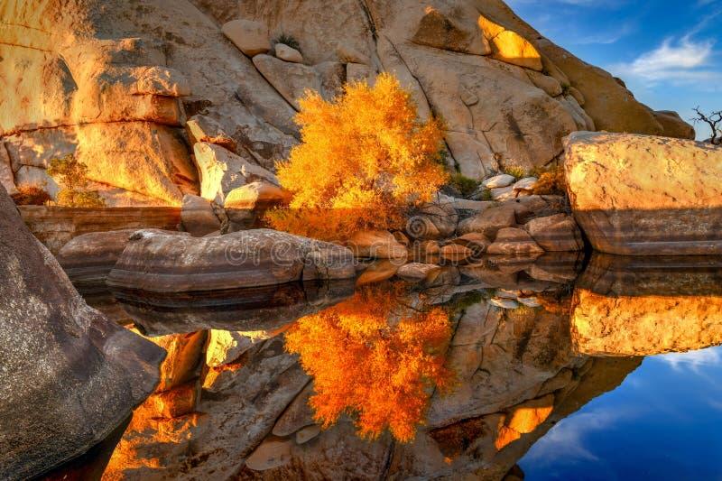 Barker Dam - Joshua Tree National Park image stock