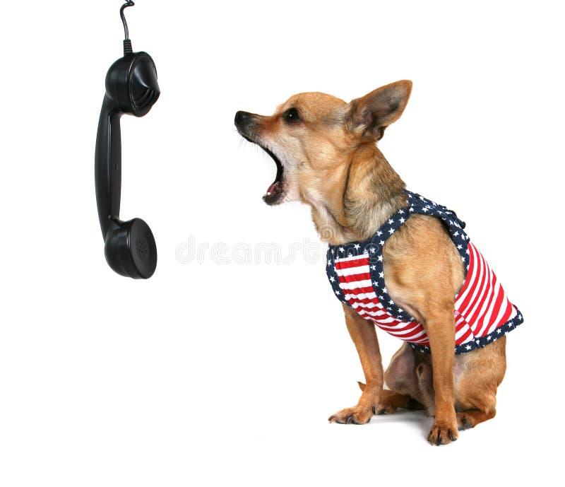 Barking dog stock image