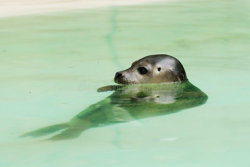 Download Barking Sea Lion stock photo. Image of seal, safari, flippers - 17885188
