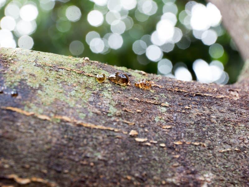 Barkwood和胶在森林里 免版税库存照片