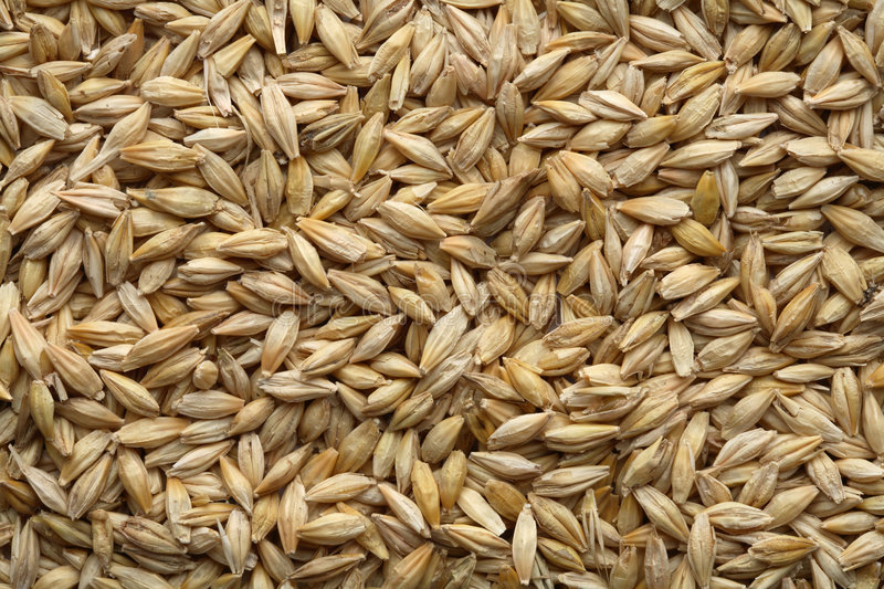 Download Barley stock photo. Image of fresh, seed, harvest, grains - 2429728