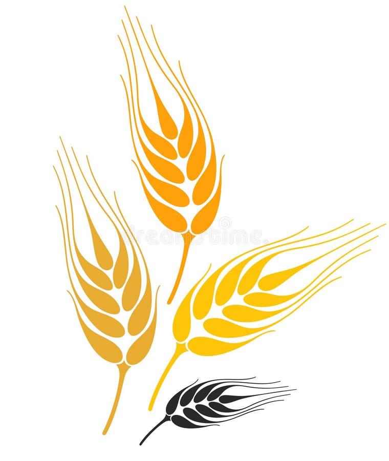 Free Barley Stock Photography - 32448102