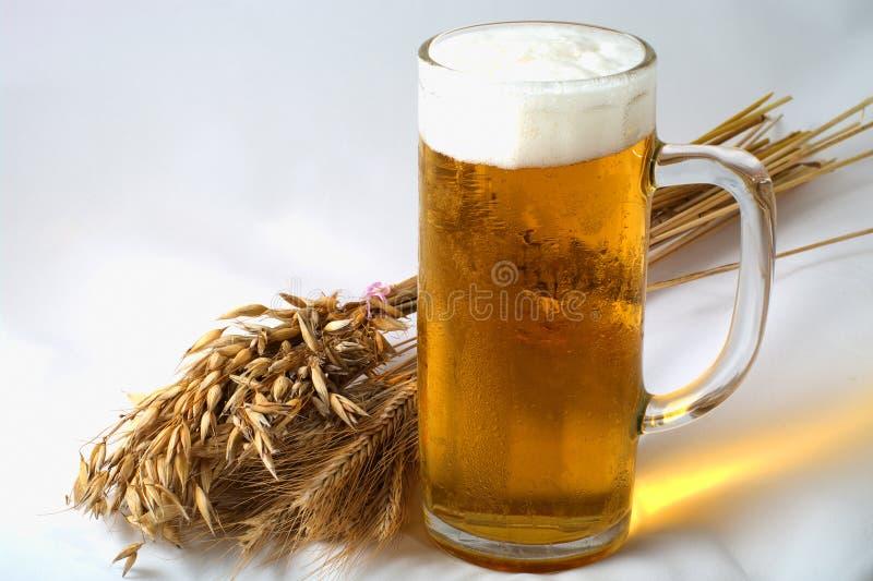 Barley and beer royalty free stock photos