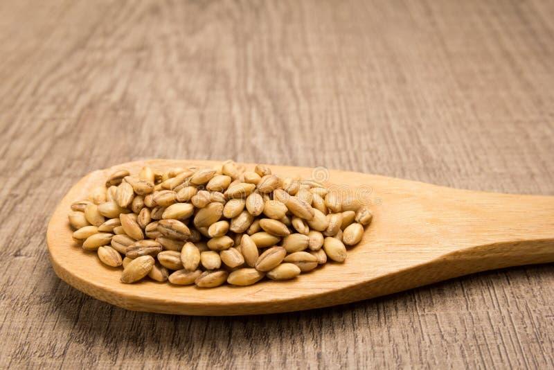 Barley cereal grain. Grains in wooden spoon. Rustic. stock photo