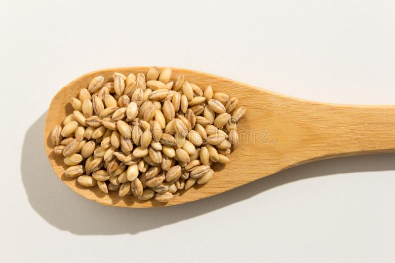 Barley cereal grain. Nutritious grains on a wooden spoon on whit royalty free stock photos