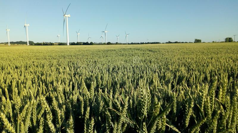 Barley field, wind farm royalty free stock photography