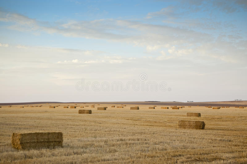 Barley Field Harvested At Sunset Royalty Free Stock Image