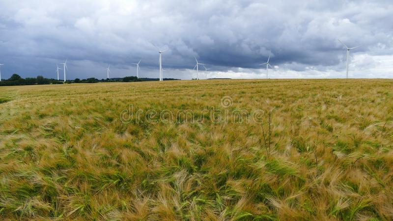 A barley field with many wind turbines on the horizon royalty free stock photo