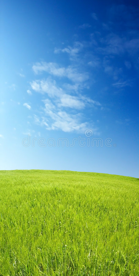 Download Barley Field Over Blue Sky Royalty Free Stock Photography - Image: 2338637