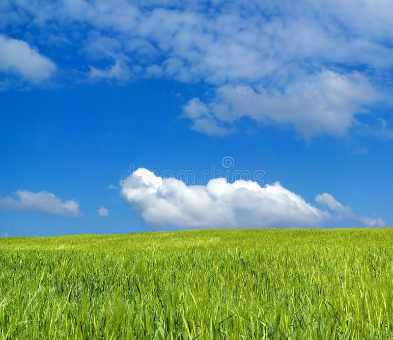 Download Barley field over blue sky stock photo. Image of agriculture - 2338736