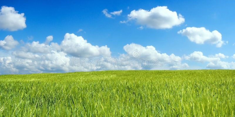 Download Barley field over blue sky stock image. Image of crops - 2457437
