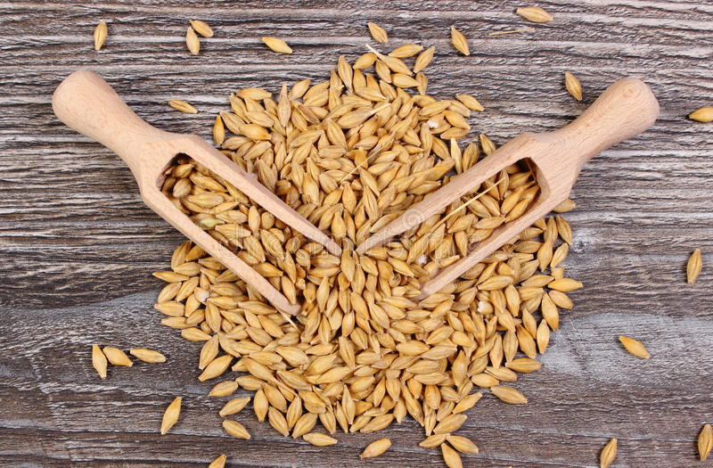 Barley grain with spoon on wooden background stock photography