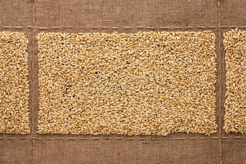 Barley grains on sackcloth, with place for your text stock photo