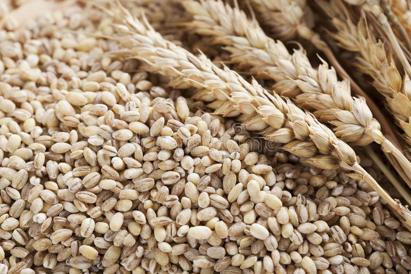 Barley Grains and Stalks stock photos
