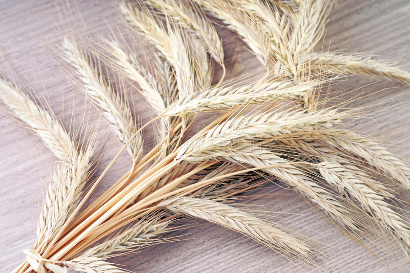 Download Barley stock photo. Image of farming, cornfield, oats - 39504852