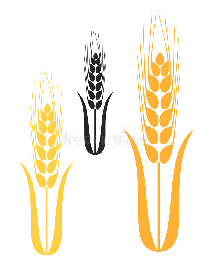 barley stock vector illustration of wheat farm component 48370777 rh dreamstime com barley vector free wheat barley vector