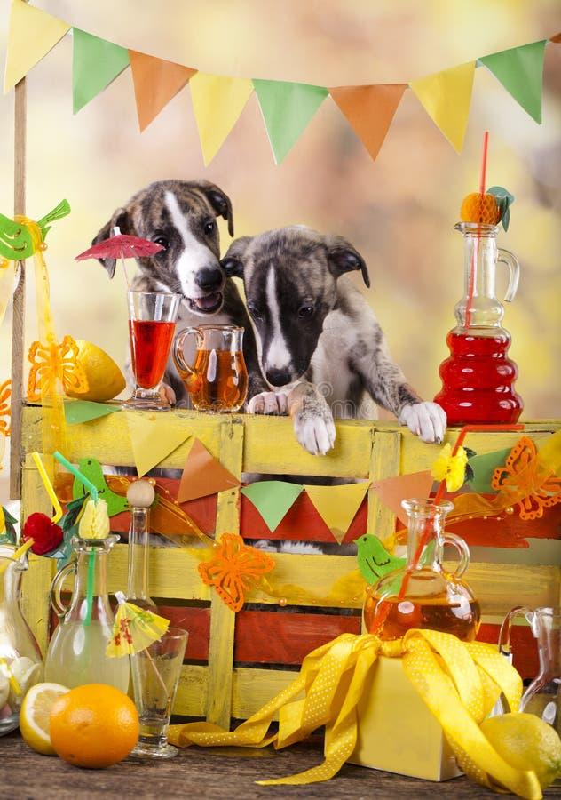 Barmans dans la petite barre de limonade de chiots photo libre de droits
