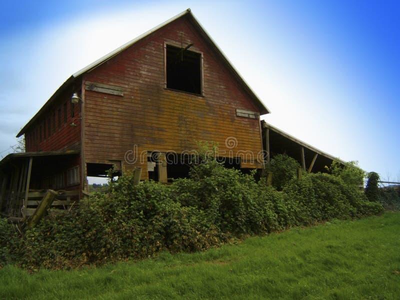 Barn blackberrys stock photos