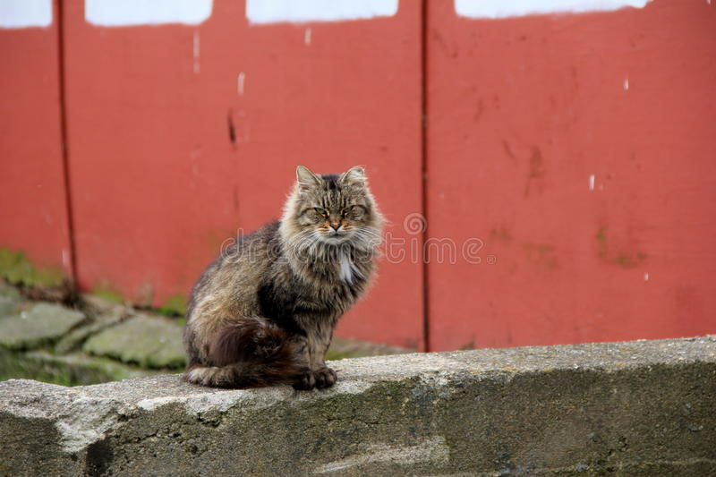Barn cat sitting on old stone wall. Green-eyed barn cat with pretty tiger markings, seated comfortably on old, weathered stone wall, with red siding behind stock images