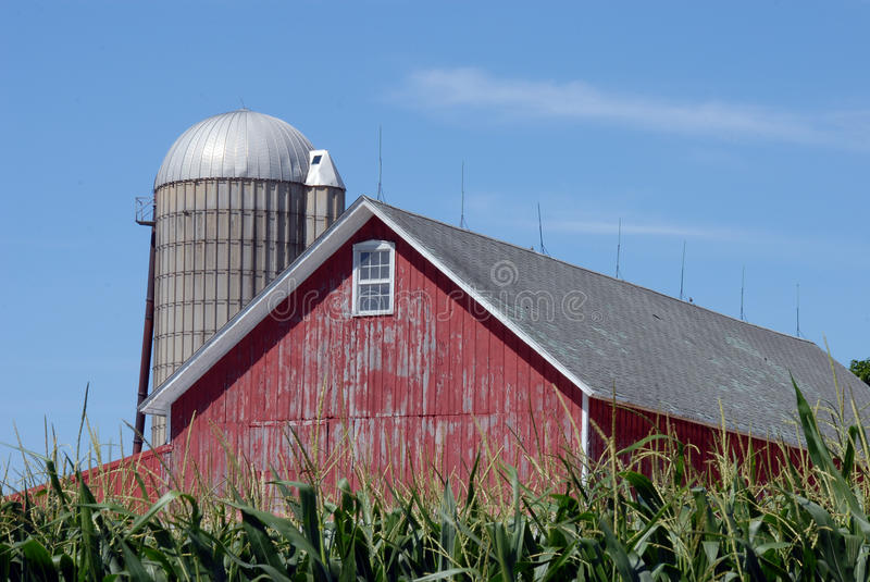 Barn in corn field stock images
