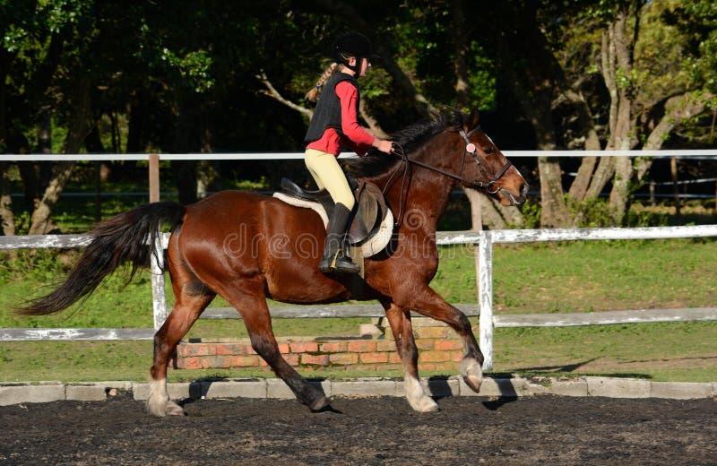 Barn för hästridning arkivfoton
