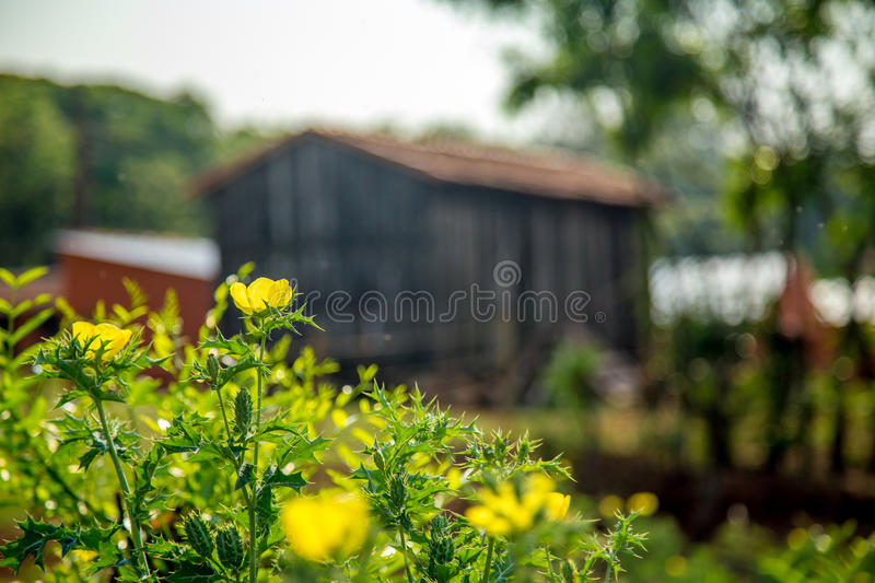 Barn farm old rural. Rustic wood architecture stock images
