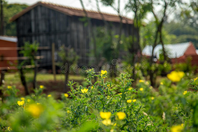 Barn farm old rural. Rustic wood architecture royalty free stock photo
