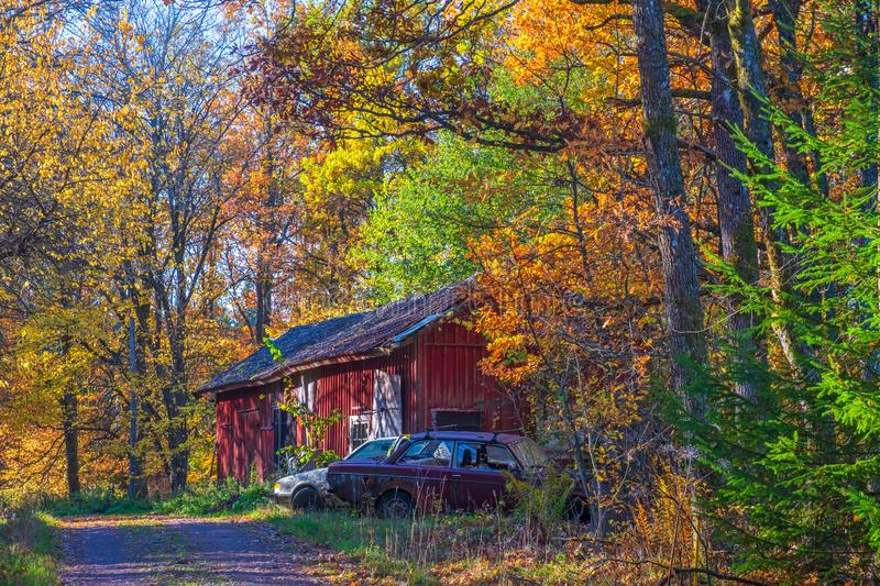 Barn in the forest in the autumn with old cars. At a dirt road royalty free stock image