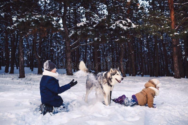 Barn har gyckel som spelar med deras hund i, parkerar i vinter royaltyfri bild